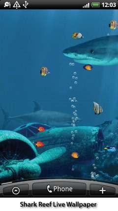 live-shark