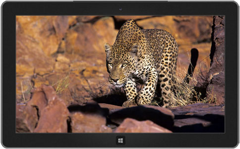 windows 8 themes - africa wildlife