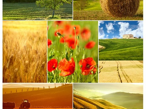 SmartphoneCamera-Collage