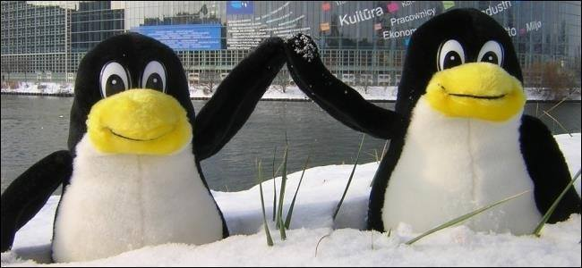 Stuffed penguins in the snow.