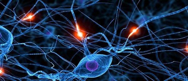 neutralnetwork-synapse