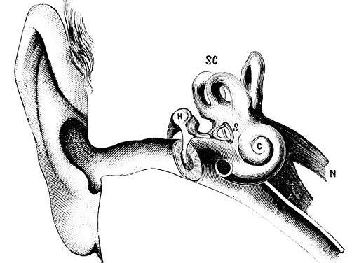 512px-psm_v14_d076_auditory_canal_bones