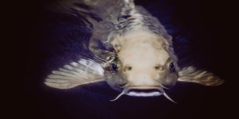 Catfishing-Featured.jpg