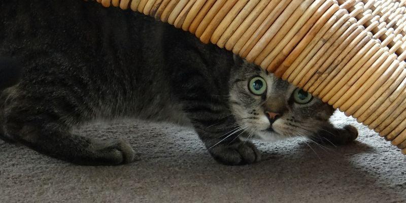 cat-hidden-files-windows-featured