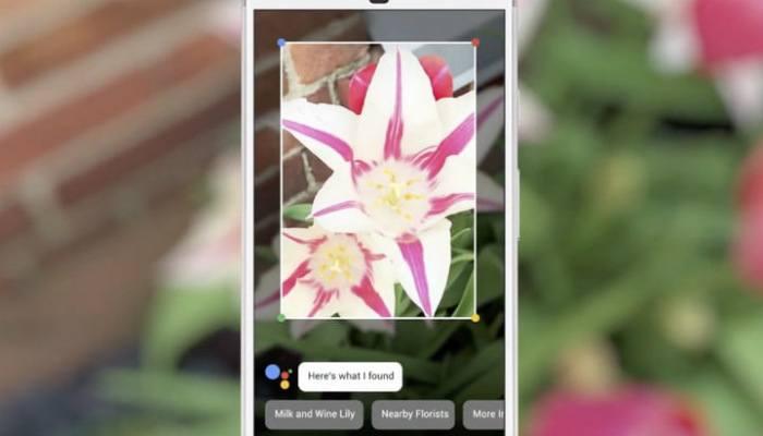 google-lens-flower