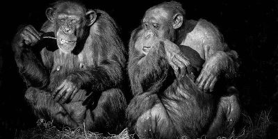 Facial Recognition Expands to Being Used to Follow Endangered Primates