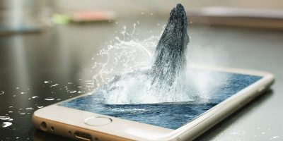 "What Is a ""Whale"" In Mobile Gaming?"