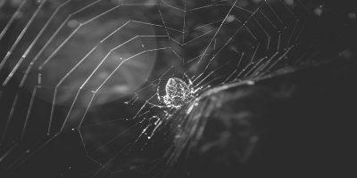 Featured Dark Web Melissatg 22868811355