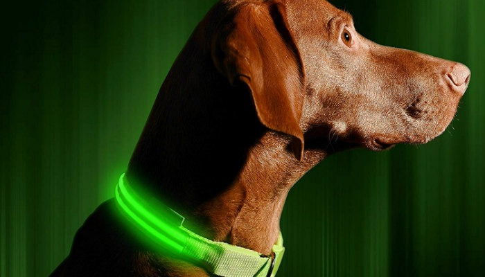 Pet Tech Ledcollar