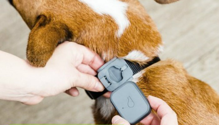 Pet Tech Whistle