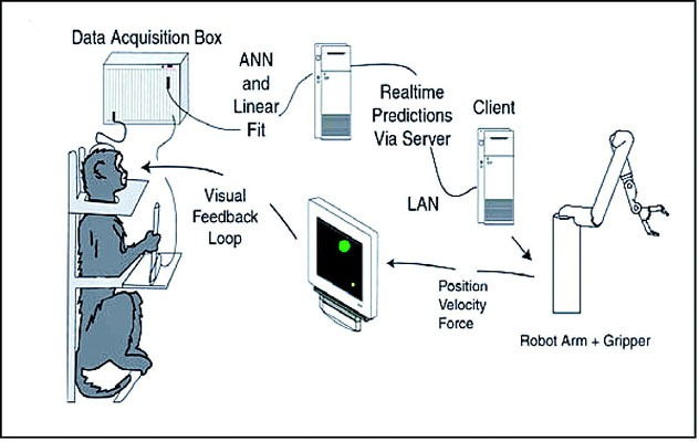 Bci Monkey Robot Arm Diagram