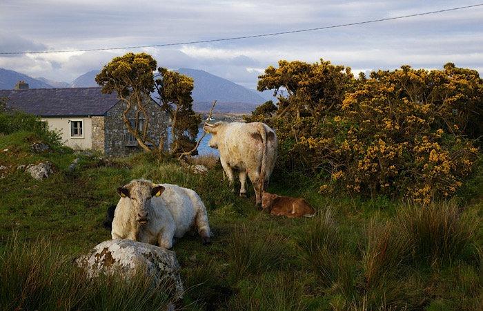 News Rural Illegal Boosters Farmhouse