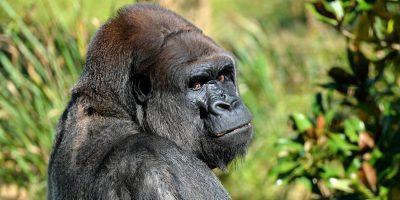 News Galaxy Note20 Gorilla Glass Featured