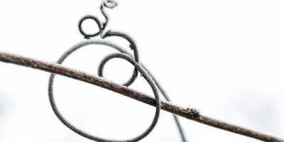 A plant looping around a twig.