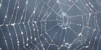 The Differences Between Deep Web and Dark Web: What You Need to Know