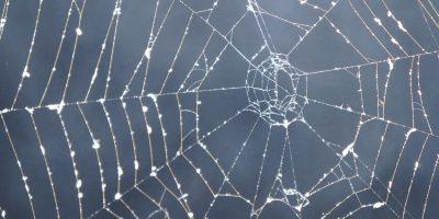 A cobweb.